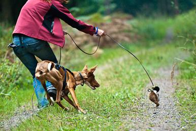 Seminar Spiel- erkennen und verstehen Hundetrainingteamarbeit, Februar 2012