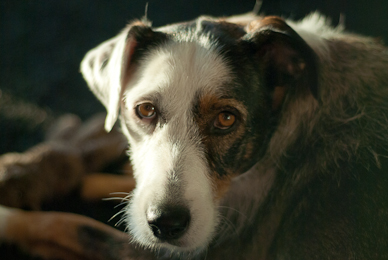Traumhund aus dem Süden, Parasitus e.V.