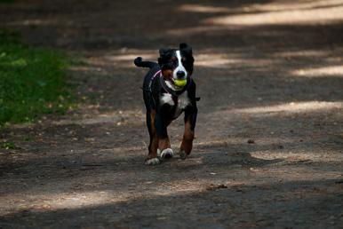 Tagesseminar Das Gefühlsleben der Hunde. Hilde