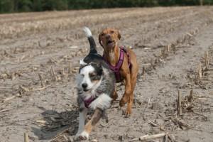 Tagesseminar Das Gefühlsleben der Hunde. Mädels