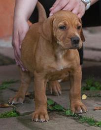 Tagesseminar Vom Embryo zum erwachsenen Hund. Peppa 02
