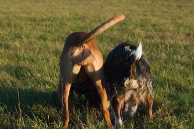 Tagesseminar Vom Embryo zum erwachsenen Hund.